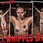 Hard Torture – Bullwhipped Bitch